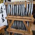 さんま・サンマ・秋刀魚