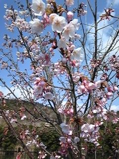 阿波一国参り〜もうすぐ春ですね〜