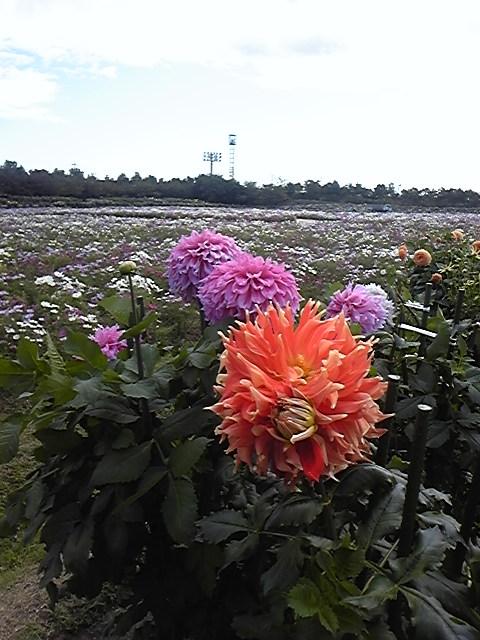 ☆花華と紅葉!